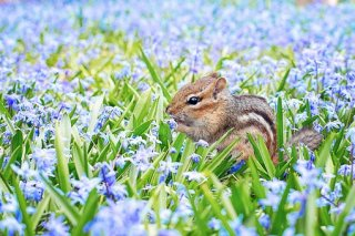 chipmunk-with-flowers